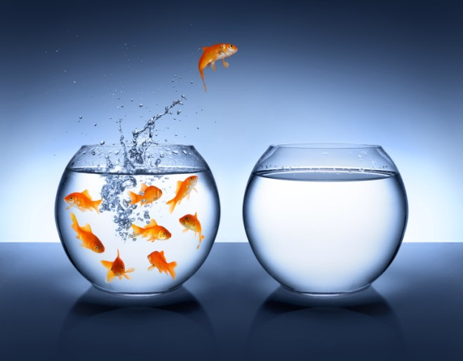 leap-of-faith-goldfish_med_37503448-768x600