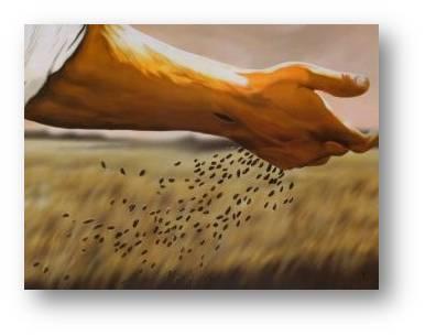 scatter-seeds